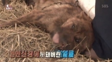 '동물농장' 얼굴 40% 뜯긴 견공 호순이…범인은