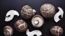 버섯 vs 보리…베타글루칸 효능 뭐가 다르지?