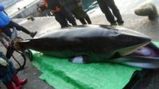 고래싸움에 檢-警 등 터진다?…수사권 조정 대리전된 '울산 고래고기' 사건