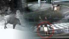 부서진 아파트 공동현관문…사라진 범인 알고보니