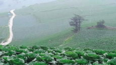 [지구의 역습, 식탁의 배신-농산편(상)]태백 매봉산의 여름 배추는 녹아내렸다
