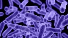 '슈퍼박테리아' 잡을까…美서 흙 속 새 항생물질 발견