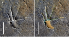 경남 하동서 1억1000만년전 도마뱀 발자국 발견