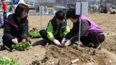 의왕시, '행복가꿈 주말농장' 370구좌 분양