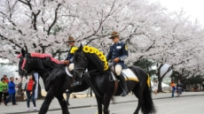 경마장 가는 길은 소풍 길…벚꽃축제, 청년놀이터
