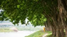 봄 여행주간 전국 10곳서 걷기여행 축제