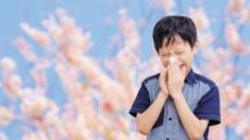 [이 봄, 알레르기 일상] '미세한' 꽃가루 습격…비염의 계절