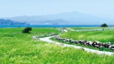 '청보리 섬' 가파도, 예술 옷으로 갈아입다