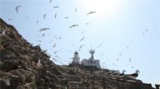 괭이갈매기 천국 홍도…철새들의 휴식처로 거듭나다