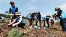 '온실가스 줄여라' 축구장 35개 규모 숲 만든다