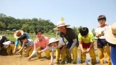 쌀은 어떻게 만들어질까?…강동구, '논학교' 운영
