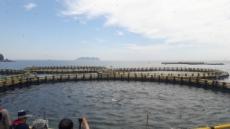 '참치의 왕' 참다랑어 상업양식 길텄다…첫 출하행사
