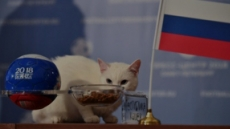 """[TAPAS]""""얘네가 이긴다옹"""" 러시아 월드컵 점쟁이 아킬레스"""