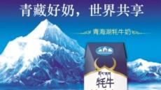 [aT와 함께하는 글로벌푸드 리포트]낙타·양·야크유…중국서 뜨는 유제품 틈새시장