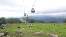 정선 산꼭대기 하이원 '동물농장' 식구 10배 늘린다