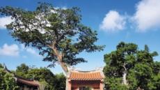 동서양과 대륙·해양문화 多품고…타이난 '퓨전문화'를 만들다