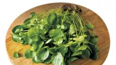케일보다 영양만점 '녹색채소 5대천왕'