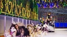 겨울공화국 원마운트, '8월의 크리스마스' 눈길