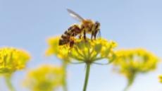 [지구의 역습,식탁의 배신-꿀벌의 수난]꿀벌이 지구 떠나는날, 지구는 인간을 떠난다
