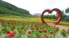 해발 1100m 하이원에 피어난 무지개 꽃동산