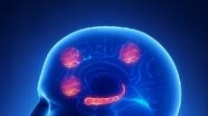 일 자꾸 뒤로 미루는 사람은 뇌 크기가 다르다?