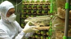 [과학] 고령실험동물 확보…퇴행성질환 등 노화연구 본격화된다