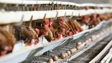 닭 가격 제 마음대로 정해 농가에 피해 전가…하림, 과징금 7억9000만원