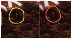 이케아, 印매장 음식서 또 벌레 '꼬물꼬물'…소비자 '으악'