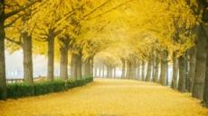 가을, 타지 말고 걷자…10월 걷기여행길 7선