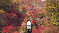 400여종 단풍나무…광주 화담숲 축제로 물든다