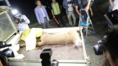 '퓨마 탈출' 오월드 원장·팀장 중징계…도시공사는 기관경고