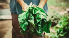 [리얼푸드]유기농 식품의 섭취가 암 발병 위험도 낮춘다