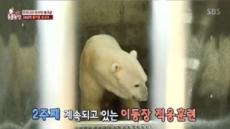 우리나라 마지막 북극곰 '통키', 갑작스런 이별