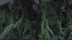 [학고재, 사진작가 권순관 '더 멀치 앤 본스'展] 영문도 모른채 사라져간 이들...숲이 기억하는 폭력의 역사