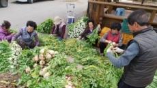 [포토뉴스]영양 무청 시래기 손질하는 농민들