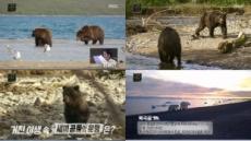 MBC '곰', 역대급 명품 다큐의 등장..인간과 곰은 공존할 수 있을까?