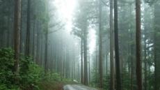 '여름·오후·숲길'...스트레스 제로 힐링 위한 최적의 환경