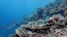 몰디브 '최고 다이빙 여행지' 수상…무푸쉬 등 90개 관광섬