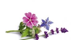 인슐린 분비 촉진 '민들레'…혈압 낮추는 '히비스커스'…꽃, 음식이 되다