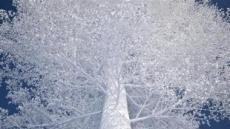 [지상갤러리] 류호열, Baum, digital c-print, 100×150cm, 2013