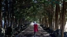 제주 1월에 가볼만한 곳…샤이니 숲길 울컥