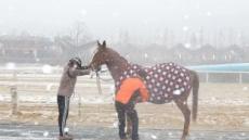 [헤럴드e렛츠런]경주마에게 배우는 따뜻한 겨울나기