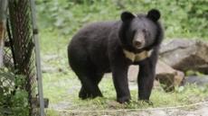 '곰-3부,공존의 꿈' 곰은 숲, 자연, 지구가 살아있다는 증거