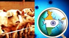 인도 여행객 '돼지독감 주의보'…올해만 312명 사망