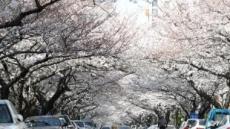 벚꽃, 올해는 평년보다 4∼7일 빨리 핀다