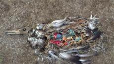 """굶어죽은 어린 새의 뱃속 가득 쓰레기…""""인간의 행동을 비추는 거울이죠"""""""