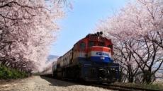 [여행] 메이저리그급 야구장 오픈, 벚꽃만발 군항제 기다리는 창원의 봄