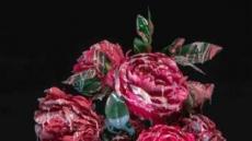 [지상갤러리]박효진, Blossom-peach, 66×100cm, pigment print, 2019