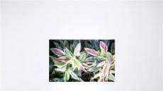 [지상갤러리] 장유정, Natural Nature 3 archival print