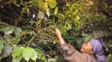 [aT와 함께하는 글로벌푸드 리포트] 태국, 커피소비 年15% 증가…불붙은 신규매장 경쟁